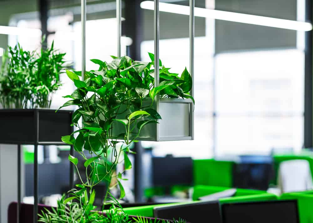 a good commercial office renovation idea is to add plants