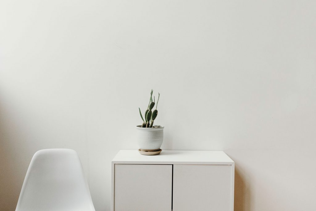 A small cactus sitting on a white shelf against a white wall