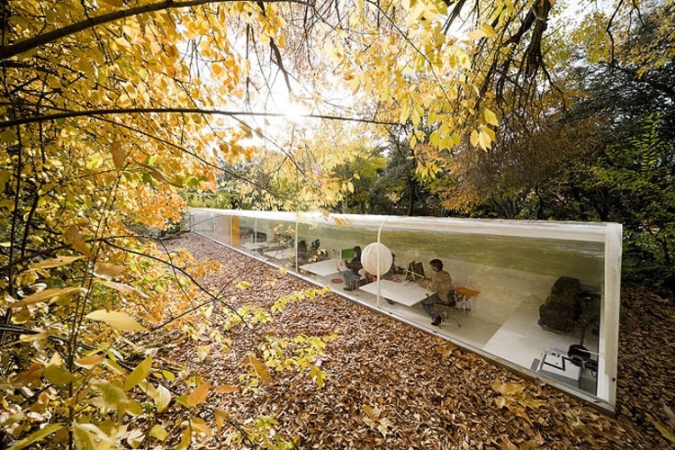 Glass office half-submerged into the ground, surrounded by trees and foliage